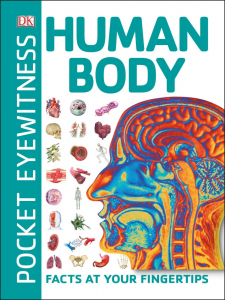 Human Body - Pocket Eyewitness0