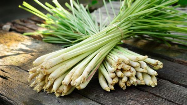 Ulei esential de Lemongrass (15 ml) doTERRA