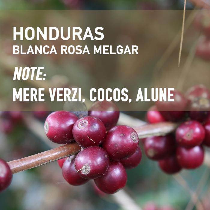 Honduras Blanca Rosa Melgar, Cafea de Specialitate 0