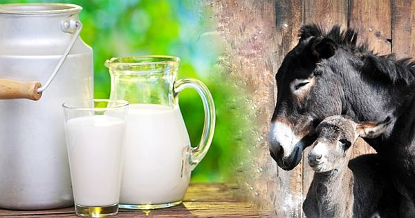 7 Beneficii ale Lapteui de Magarita