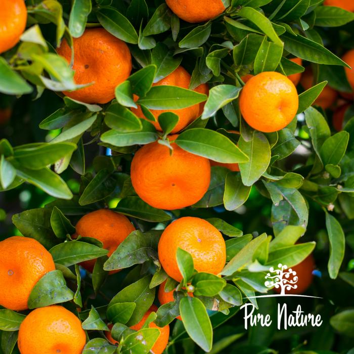 ulei-esențial-de-portocală-bio [1]