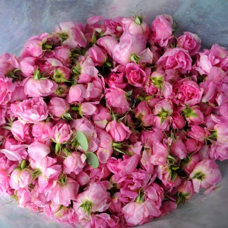 ulei-de-trandafir-10-jojoba [1]