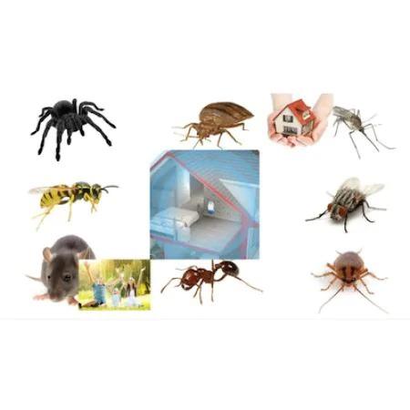 Aparat folosit pentru anti rozatoare , anti gandaci, Pest Reject PRO [1]
