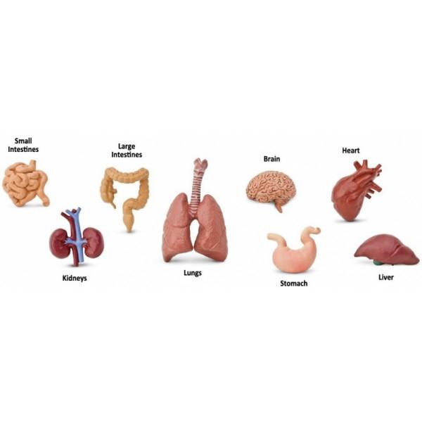 Tub 8 Figurine Organele Corpului 1