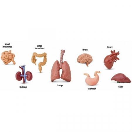 Tub 8 Figurine Organele Corpului1