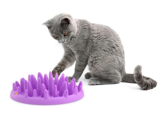 Castron interactiv pentru pisici, CATCH 0