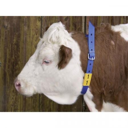 Curea marcare bovine, cabaline, albastra, 120 cm [1]