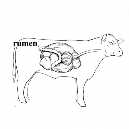 Magnet ruminal cu carcasa pastic [1]