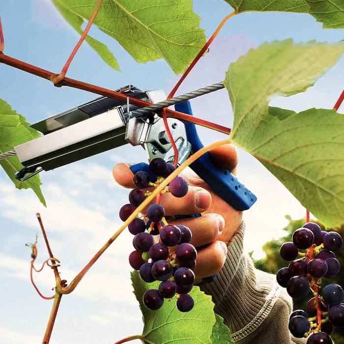 Rapid PRO LIG150 Vine Pliers, high capacity magazine and 2 boxes of C50 / 4-14mm vine staples, galvanized, 4.200/box-big
