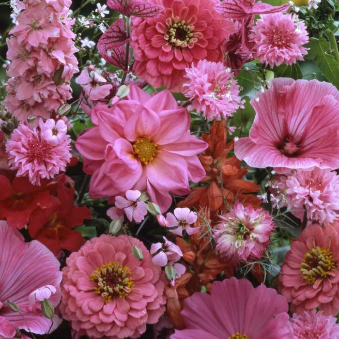"""SEMINTE DE FLORI ROZ """"FLOWER DREAMS MIX"""" 0"""