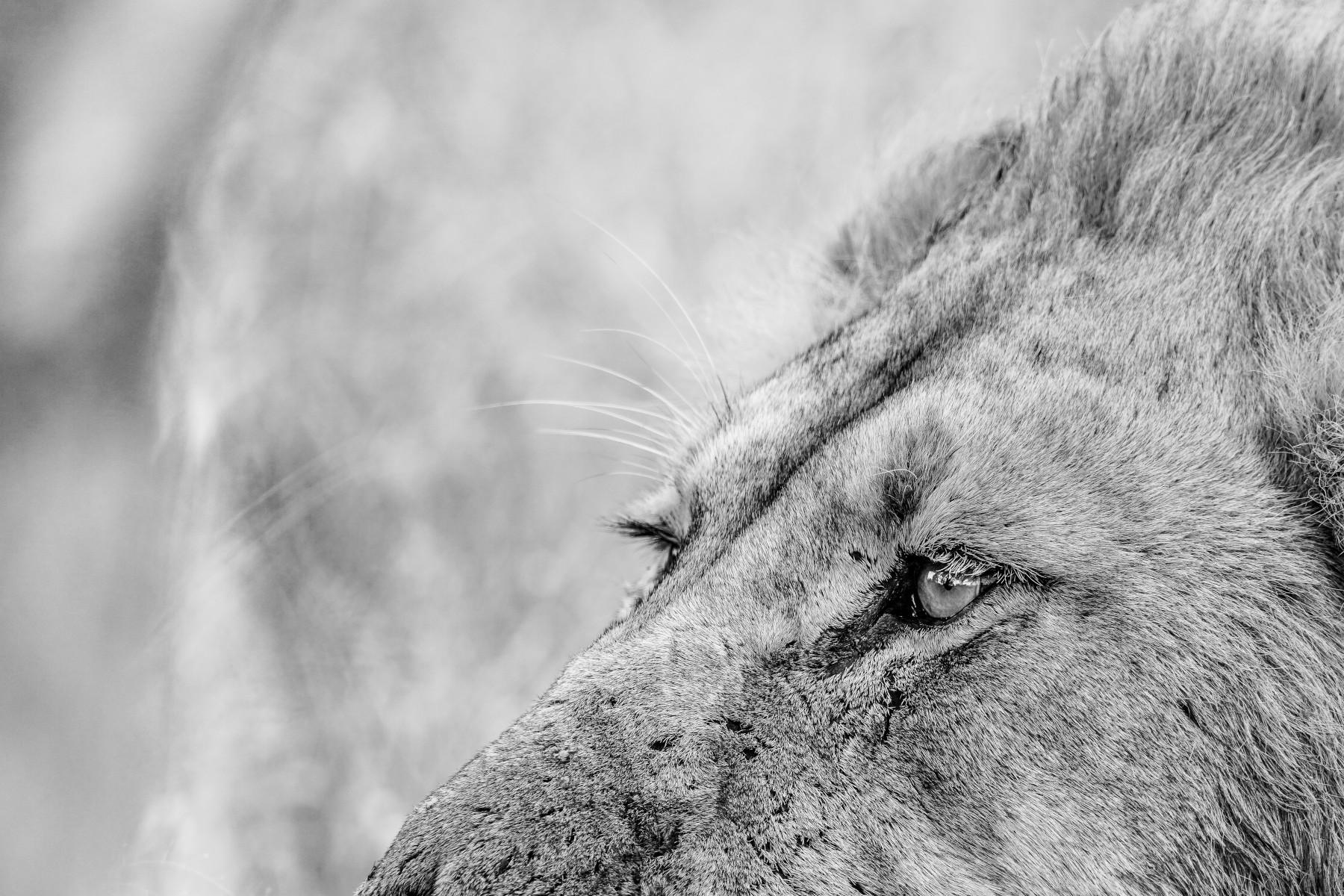150–600mm F5-6.3 DG DN OS | Sports - Safariul nu este doar despre safari - Trevor Ryan McCall-Peat