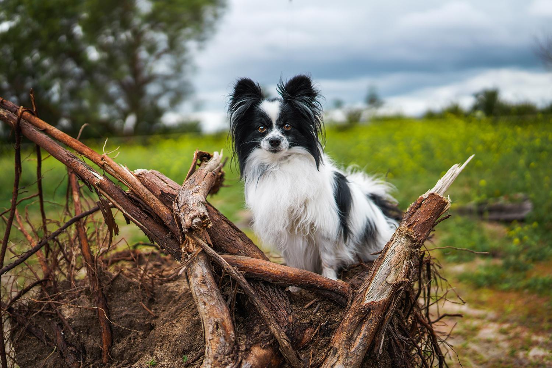 Sfaturi pentru fotografierea animalelor de companie cu Sigma I Art