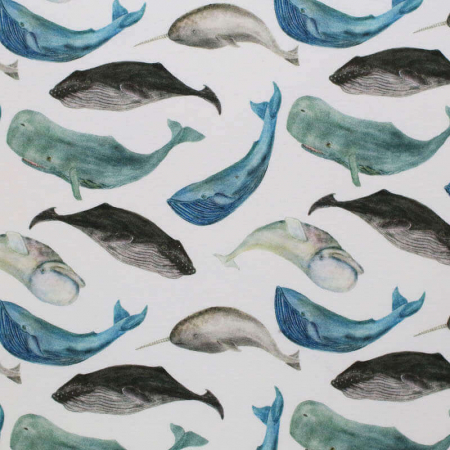 Summer Sea Animals [1]
