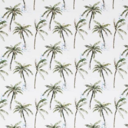 Summer Palm [1]