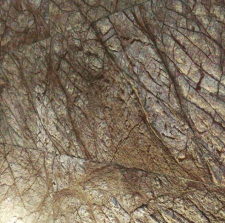 Rainforest Brown 20x61 cm autoadeziva1
