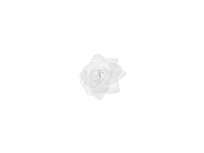 Trandafiri adezivi de culoare alba, 9 cm (1 pach/24 buc) 4