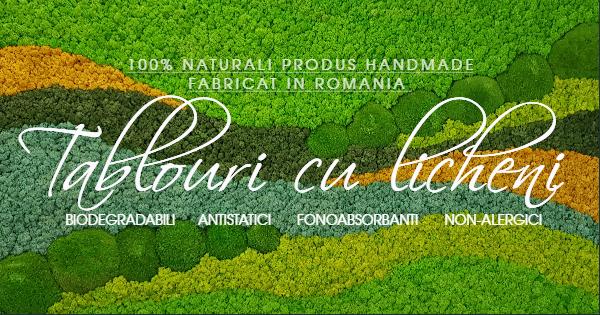 Licheni naturali stabilizati Jolie Arts