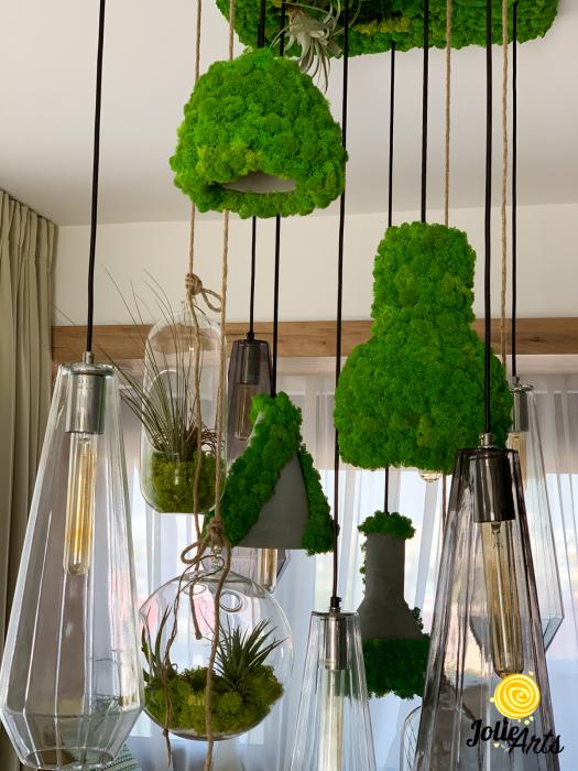 Decoratiuni cu licheni, muschi, plante stabilizate, plante aeriene Jolie Arts [1]