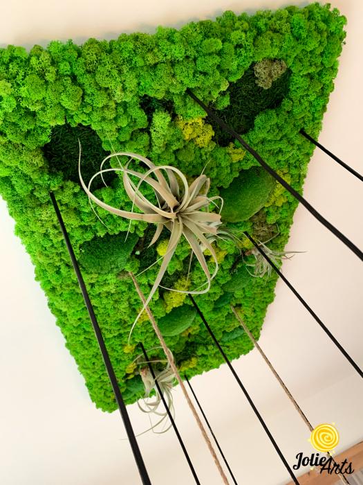 Decoratiuni cu licheni, muschi, plante stabilizate, plante aeriene Jolie Arts [3]