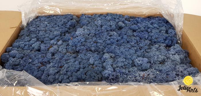 Licheni decorativi naturali stabilizati, culoare Albastru Azur, Azur Blue 86, Jolie Arts [0]