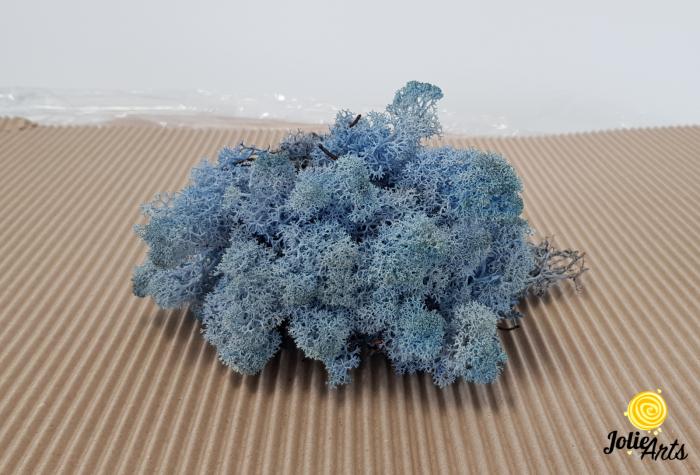 Licheni decorativi naturali stabilizati, culoare albastru lavanda, lavender blue 85,Jolie Arts [1]