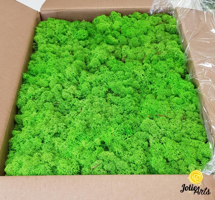 Licheni decorativi naturali stabilizati, culoare Verde Deschis, Jolie Arts [0]