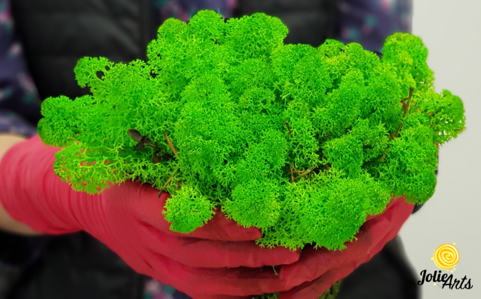 Licheni decorativi naturali stabilizati, culoare Verde Deschis, Jolie Arts [2]