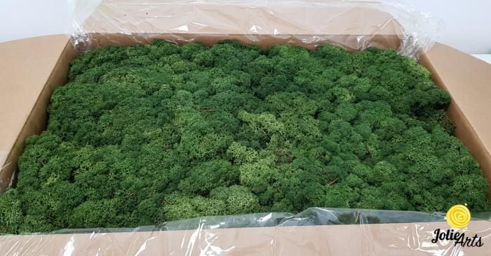 Licheni decorativi naturali stabilizati, culoare verde inchis, Jolie Arts [0]
