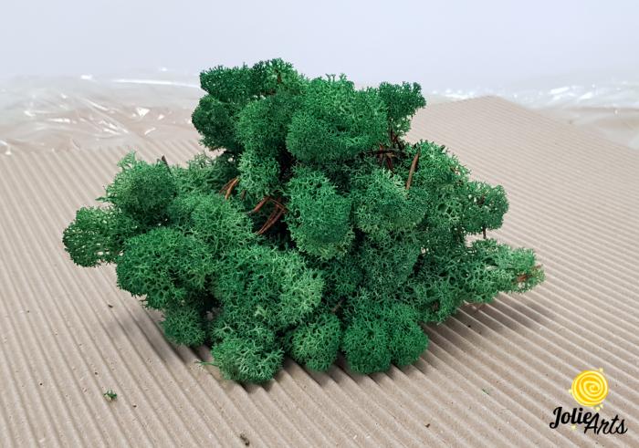 Licheni decorativi naturali stabilizati, culoare verde smarald, grass green 78, Jolie Arts [1]