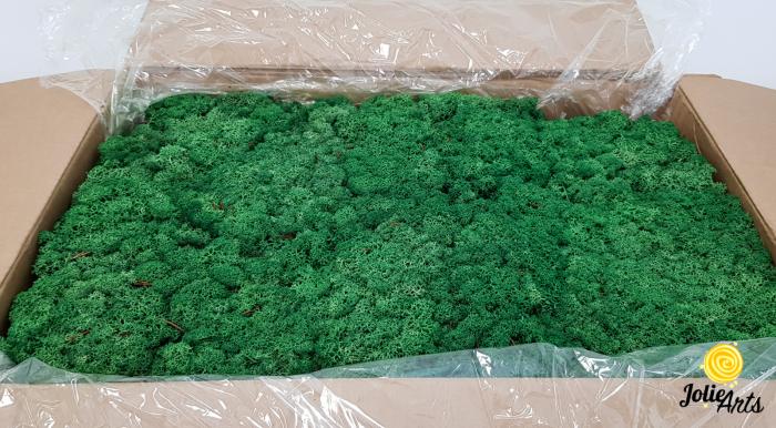 Licheni decorativi naturali stabilizati, culoare verde smarald, grass green 78, Jolie Arts [0]