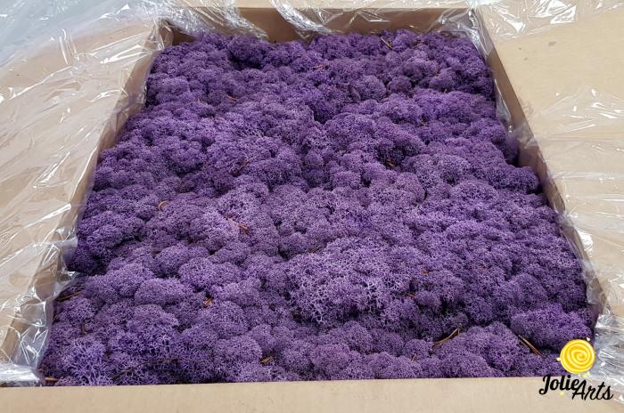 Licheni decorativi naturali stabilizati, Culoare Mov, Purple 67, Jolie Arts [0]