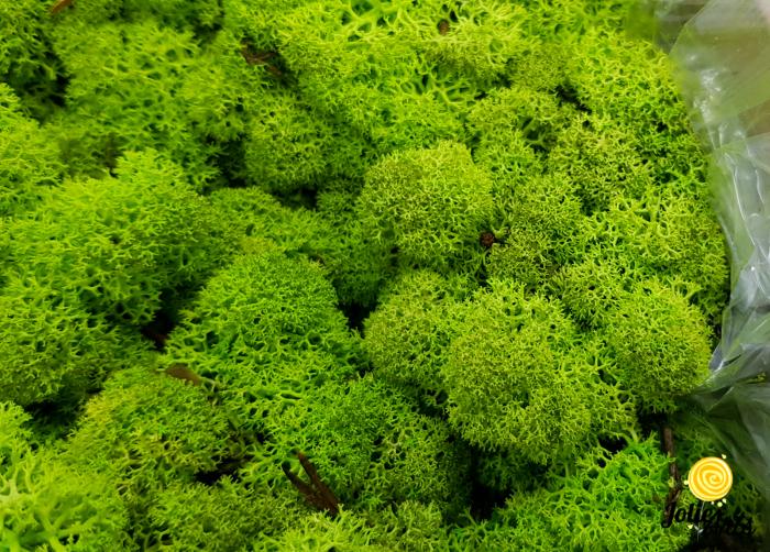Licheni decorativi naturali stabilizati, Culoare Verde Primavara, Spring Green 55, Jolie Arts [1]