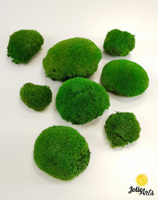Muschi bombati stabilizati culoare Light Green. [1]