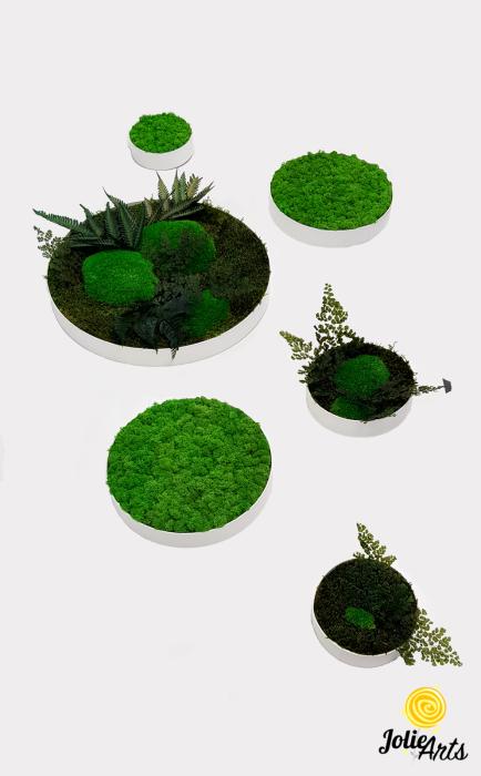 Set 6 rame pe rotund cu licheni, muschi si plante naturale stabilizate Jolie Arts [0]