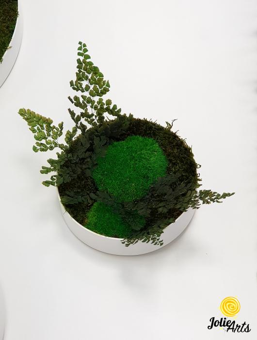 Set 6 rame pe rotund cu licheni, muschi si plante naturale stabilizate Jolie Arts [2]