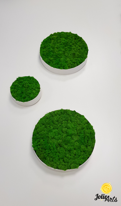 Set 6 rame pe rotund cu licheni, muschi si plante naturale stabilizate Jolie Arts [3]