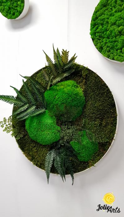 Set 6 rame pe rotund cu licheni, muschi si plante naturale stabilizate Jolie Arts [1]