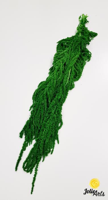 Amaranthus verde deschis Fr, Jolie Arts, www.tablouriculicheni.ro [0]