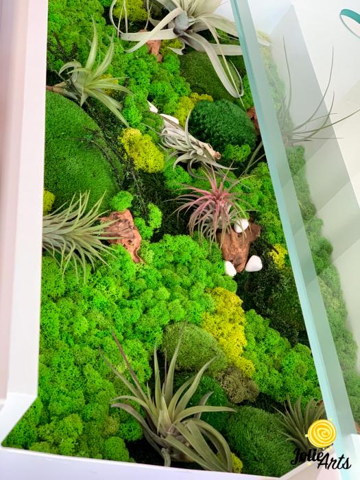 Decoratii interioare cu licheni, muschi, plante naturale stabilizate si plante aeriene [4]