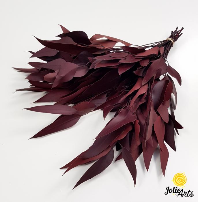 Eucalipt Populus Rosu Bordo, natural conservat, frunza alungita [1]