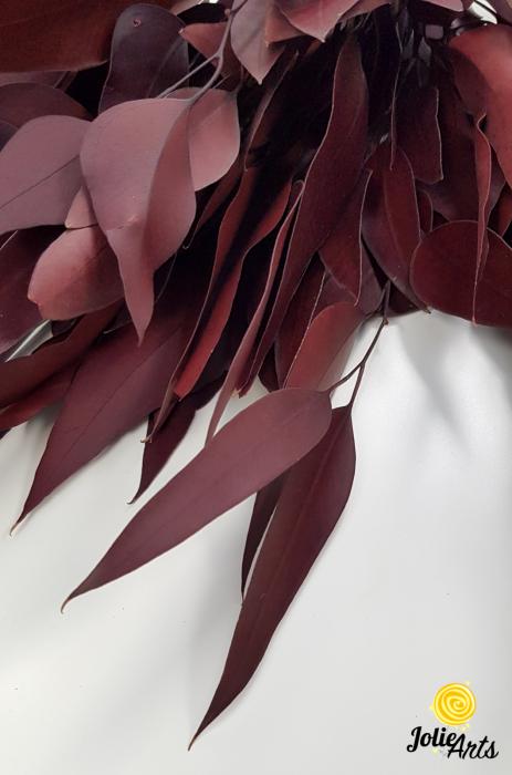 Eucalipt Populus Rosu Bordo, natural conservat, frunza alungita [2]