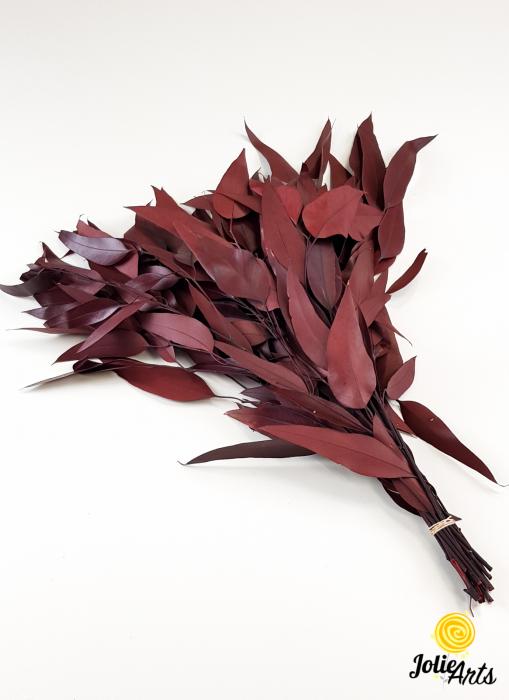 Eucalipt Pendula Rosu Bordo, natural conservat, frunza alungita [0]