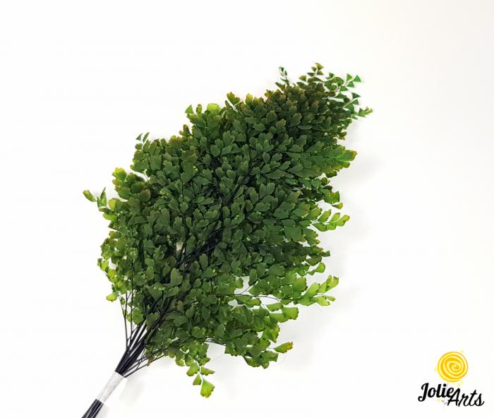 Feriga verde, Lutti Fern [0]