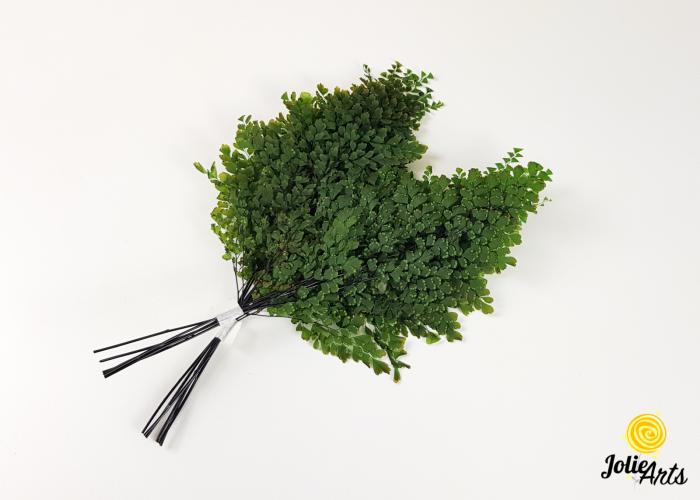 Feriga verde, Lutti Fern [1]