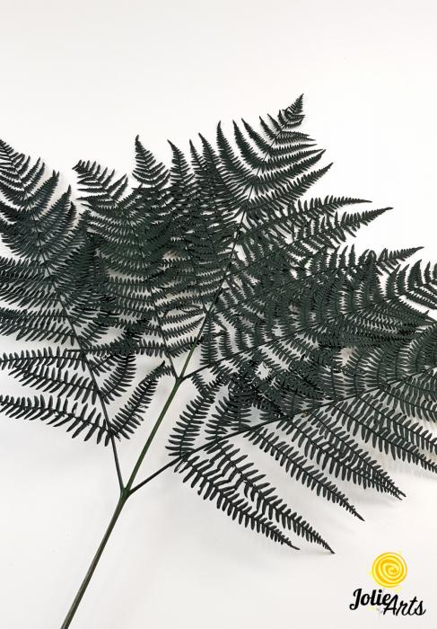 Feriga Verde inchis, naturala conservata [2]