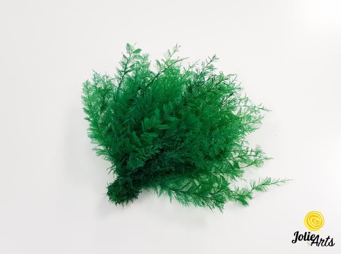 Feriga sertularia verde inchis, Jolie Arts, www.tablouriculicheni.ro [0]