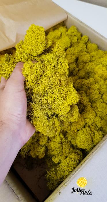 Licheni decorativi naturali stabilizati, culoare Galben / Yellow [1]