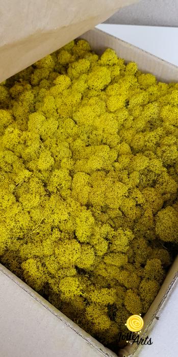 Licheni decorativi naturali stabilizati, culoare Galben / Yellow [0]