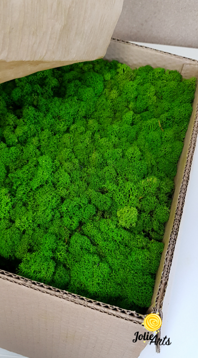 Licheni decorativi naturali stabilizati, culoare Light Green [1]
