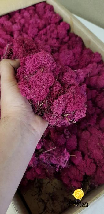 Licheni decorativi naturali stabilizati, culoare Fuchsia [2]